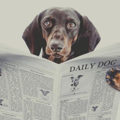 Paw Partner News