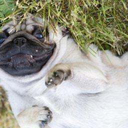 weird-wacky-dog-behaviors-explained
