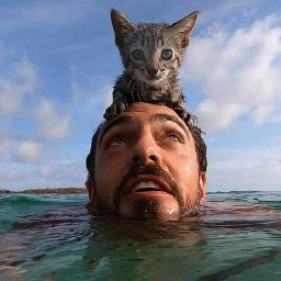 kitten-loves-swimming-with-her-dad-videos-the-dodo