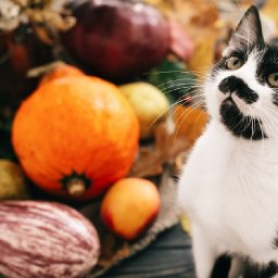 16-november-cat-names-for-your-fabulous-new-fur-baby