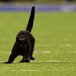 this-cat-interrupted-a-monday-night-football-match-and-made-end-zone-run