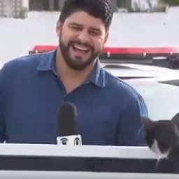 reporter-cant-stop-laughing-after-cat-interrupts-news-segment
