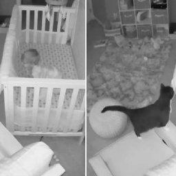 hidden-camera-captures-cat-and-baby-having-the-cutest-conversation