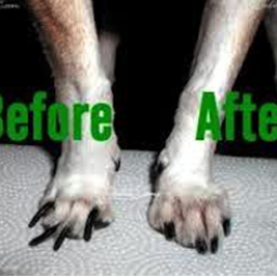 why-is-nail-trimming-for-your-pets-nails-so-important-ken-caryl-pet-spa
