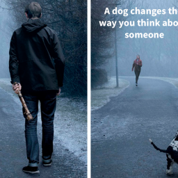 ad-campaigns-tell-how-a-dog-can-transform-a-persons-life-16-pics