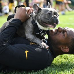 from-fear-of-dogs-to-epic-dog-dad-boujee-has-changed-steelers-receiver-juju-smith-schuster