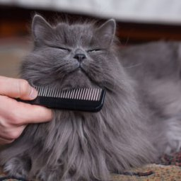 7-grooming-tips-for-long-haired-cats