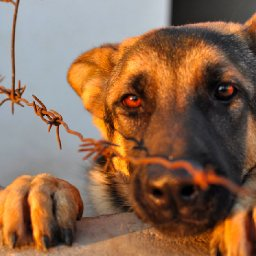 new-law-will-require-animal-abusers-to-be-registered-like-sex-offenders