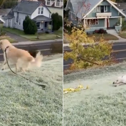 a-golden-retriever-slid-down-a-grassy-hill-and-his-happy-face-on-the-way-back-up-was-too-much