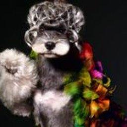 1385-best-opawz-creative-grooming-images-in-2019-creative-grooming-pets-creative