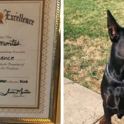 grandma-forges-diploma-for-dog-who-failed-obedience-school