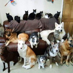 woman-gets-all-17-of-her-dogs-and-cats-to-pose-for-photo