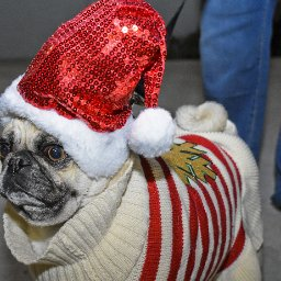 photos-laredo-pets-dressed-in-festive-sweaters-for-pawliday-party