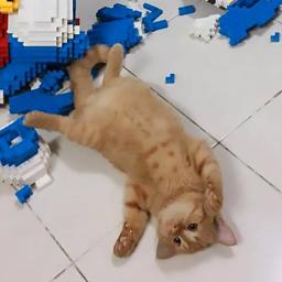 cat-wrecks-2432-piece-model-owner-spent-a-week-building