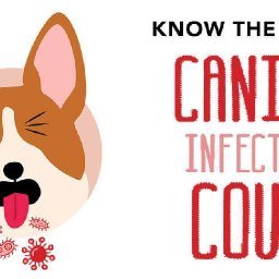 know-the-facts-canine-infectious-cough-pet-boarding-and-daycare