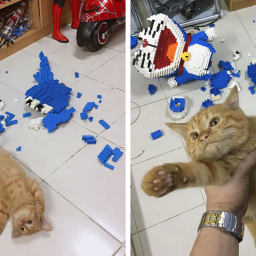 cat-destroys-a-2432-piece-doraemon-figure-that-took-its-owner-7-days-to-make-doesnt-seem-to-regret-it