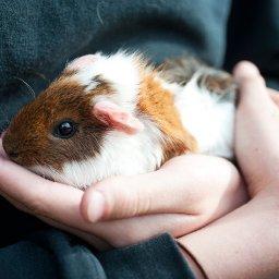 3-cuddly-small-pets-that-make-wonderful-companions