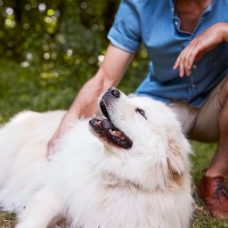 6-simple-exercise-tips-to-keep-pets-healthy-and-happy