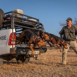 texas-pack-hounds-charge-to-the-rescue-for-rhinos-in-south-africa-nabbing-145-poachers-so-far