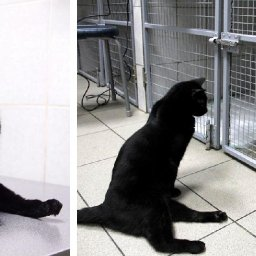 paralyzed-cat-drags-himself-around-a-vet-clinic-to-cuddle-sick-dogs