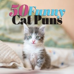 50-purr-fectly-funny-cat-puns-to-try-when-you-feel-like-kitten-around