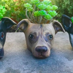 these-adorable-succulent-planters-are-modeled-after-your-pet