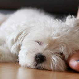 veterinarians-share-their-best-advice-for-keeping-pets-happy-and-healthy-while-youre-social-distancing