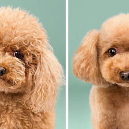 dogs-before-and-after-their-haircuts-16-pics