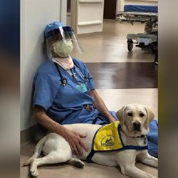 a-therapy-dog-brings-comfort-to-er-doctors-on-the-frontlines