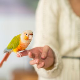 5-tricks-to-teach-your-pet-bird