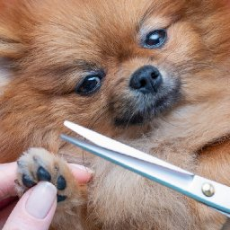 this-grooming-kit-has-everything-you-need-to-give-your-dog-a-salon-treatment-at-home