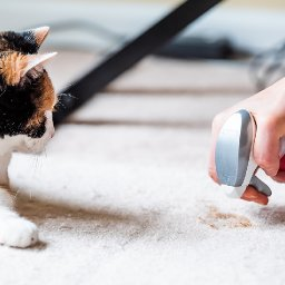 five-tips-for-getting-pet-odor-out-of-your-home-and-belongings