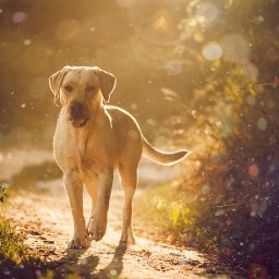 do-pets-suffer-from-seasonal-allergies