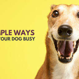 33-simple-ways-to-keep-your-dog-busy-indoors