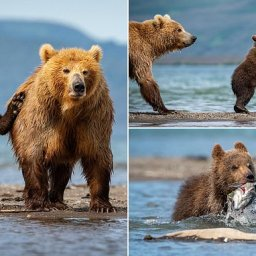 adorable-photos-show-mother-bear-teaching-young-cubs-how-to-fish