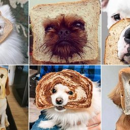 pet-owners-post-adorable-snaps-of-dogs-peering-through-slices-of-bread