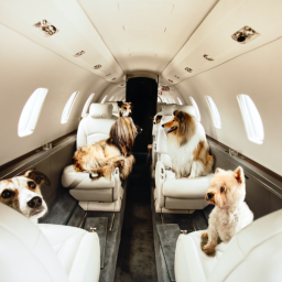 this-company-offers-private-jet-travel-for-pets