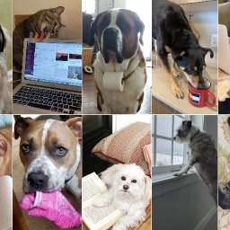 photos-pets-on-conference-calls-napping-on-laptops-stealing-socks-and-social-distancing-with-us