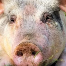 animal-sanctuary-pen-pals-program-connects-kids-with-cows-pigs-and-more