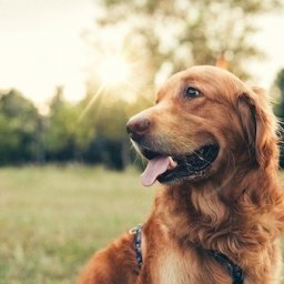 dog-owners-warned-to-be-aware-of-heatstroke-dangers-as-temperature-set-to-rise
