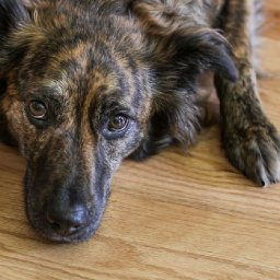 how-to-handle-your-pets-anxiety
