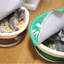 two-cats-fall-in-noodle-love-with-cup-japanese-noodle-beds