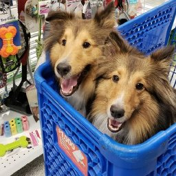 shopping-doesnt-have-to-be-ruff-the-surprisingly-dog-friendly-stores-to-take-your-pooch-shopping-isnt-always-ruff