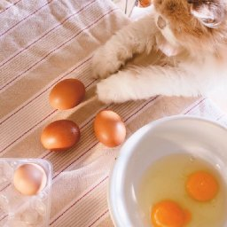 people-are-now-giving-cats-fragile-eggs-to-see-if-theyll-keep-them-from-cracking