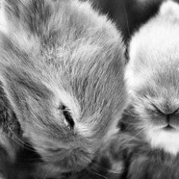 80-cutest-animal-photos-of-all-time