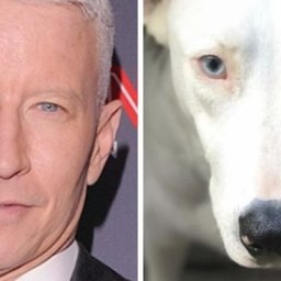 people-post-side-by-side-pics-of-famous-people-and-their-dog-lookalikes-30-pics