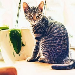 pet-friendly-houseplants-5-that-are-safe-5-to-avoid