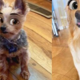 this-is-the-magical-snapchat-lens-turning-everyones-dogs-into-cartoon-characters