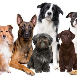 the-top-dog-names-from-2020-will-make-you-want-your-own-fur-baby