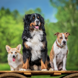 50-fascinating-facts-about-dogs